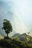 (monsieur ours) Tags: vietnam couleur color montagne montain tree arbre landsape paysage brume haze