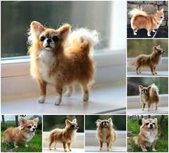 felted chihuahua (adore62) Tags: needlefelteddog needlefelted feltedfido felteddog felted commission wool toydog