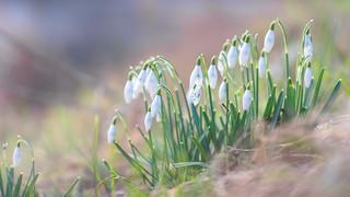 Looks like spring :-)