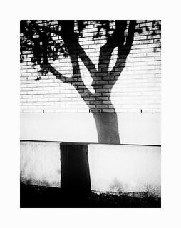 Sliced tree