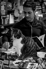 Cat Acqua Alta Bookshop (ulibelli) Tags: venice venezia venecia veneza venise venedig венеция مدينةالبندقية 威尼斯 वेनिस ベニス