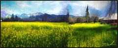 Stiched Mustard Pana (A Work of Mark) Tags: mustard color napacounty topazimpression photoshop landscape digitalpainting yellow