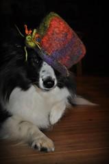 Eine Dame trägt Hut - aus der eigenen gefilzten Wolle (Uli He - Fotofee) Tags: ulrike ulrikehe uli ulihe ulrikehergert hergert nikon nikond90 fotofee winterspaziergang februar winter