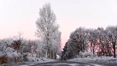 On a Cold Morning (picsessionphotoarts) Tags: winterimpression nikonphotography nikond750 nikon landschaft landschaftsfotografie landscapephotography deutschland germany winter landscape tree baum schnee snow niedersachsen coldmorning lowersaxony
