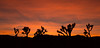 Jashua Tree National Park (Foto-Mike) Tags: canon eos 5d markiii 3 sunset southern california jashuatree nationalpark desert high 1740 mm wide angle lens 055xprob manfrotto tripod 808rc4 head nature landscape orange