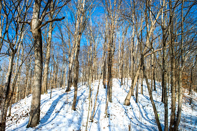 Hoosier National Forest - Charles C. Deam Wilderness - January 15, 2018