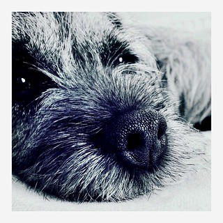 Pippi up close