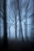 Inside my Head (Chris-Henry) Tags: killynetherfogforest woods forest fog countydown focus northernireland tree cold blue grey woodland abstract branches limbs weird mystery mysterious curious distant