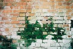 Knowle (bywater.katie) Tags: summer spring england uk film colourfilm 35mm 35mmfilm ibelieveinfilm grainisgood nature plants flowers edgeland photography colour colourphotography landscape