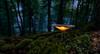 Mushroom (Eifeltopia) Tags: forest wald eifel pilz mushroom moss moos trees klee clover light evening abend rocks herbst autumn leaves blätter laub macro mft wideangle