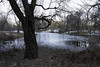 January in Central Park (Joe Josephs: 3,166,284 views - thank you) Tags: centralpark landscape nyc newyorkcity travel travelphotography city citypark cityscape outdoors park urbamexploration urban urbanparks winter january cold coldweather freezing lake pond trees