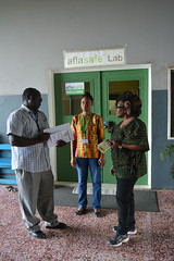 Ikenze visits Aflasafe laboratory (IITA Image Library) Tags: australianhighcommission representatives visitors forestopenday forestproject aflasafe iita