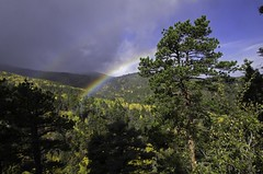 Rainbow in the San Isabel Forest