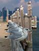 From Liberty Island (Oquendo) Tags: newyork newyorkharbor libertyisland urbanlandscape