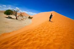 Sossusvlei (Mathijs Buijs) Tags: oryx shelter shade sun lone tree sand dune antelope desert valley namib kalahari deadvlei sossusvlei south west southern africa canon eos 7d naukluft sesriem gemsbok sky landscape girl
