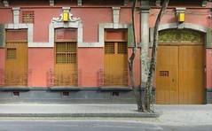 Pink Lady (Robert Saucier) Tags: mexico mexicocity mexique building architecture maison house porte door rose pink arbre tree trottoir sidewalk rue street pavement img7823