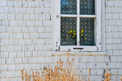Window Bouquet (vanessa violet) Tags: window white weathered rustic house home hww wednesday flowers bouquet yellow frost condensation winter cold paint old character