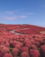 magical garden (julienfilippeddu) Tags: hitachinakashi ibarakiken japon jp hitachi garden magical travel canon