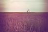 field (Smo_Q) Tags: lavender poland pentaxk3ii tree