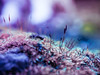 Panasonic gx80 30mm Olympus macro (Jasrmcf) Tags: panasonic panasonicgx85 panasonicgx80 macro olympusmacro30mm m dof delicate depthoffield smooth blur moss magical nature ngc bokeh bokehlicious bokehgraph colour colourful colourartaward closeup flower greatphotographers