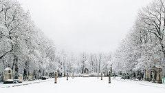 The unusual beauty (André Moecke) Tags: cemetery snow winter white memories munich munchen munique germany bayern deutschland