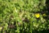 Ψίνθος (Psinthos.Net) Tags: ψίνθοσ psinthos ιανουάριοσ γενάρησ january winter χειμώνασ φύση εξοχή nature countryside afternoon απόγευμα απόγευμαχειμώνα χειμωνιάτικοαπόγευμα λουλούδια άγριαλουλούδια αγριολούλουδα wildflowers yellowflowers κίτριναλουλούδια χόρτα greens field χωράφι οξαλίδεσ οξαλίδα sorrels sorrel ξυνιέσ ξινιέσ ξινάκια ξυνάκια ηλιόλουστημέρα sunnyday