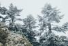 _MG_3762 (waychen_c) Tags: nantou renai renaitownship hehuanshan hehuanmountain fog mist now 台灣 南投 仁愛 仁愛鄉 合歡山 wuling 武嶺 taiwan
