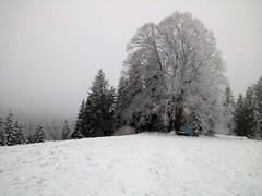 Winter 2018 (Martinus VI) Tags: raureif hoarfrost hoar rime frimas emmental winter hivers kanton de canton bern berne berna berner bernese schweiz suisse suiza switzerland svizzera swiss y180224