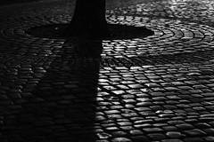 Circles of Illumination (Thomas Listl) Tags: thomaslistl blackandwhite noiretblanc biancoenegro tree bricks cobblestones light shadows evening night 100mm detail lowkey diagonal circle mood atmosphere dark grey silver
