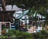 the neighbor's greenhouse (cathy sly) Tags: greenhouse intheneighborhood thinkingaboutspring 365 21365 sunday week3