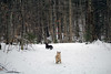 Jeter & Sedum - 1/21/18 (myvreni) Tags: vermont winter snow nature outdoors animals dogs cairnterriers pets