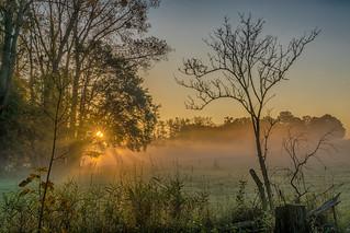 Morgennebel - morning mist