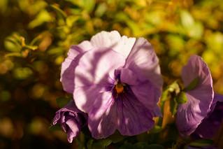 Pour tous mes amis de Flickr - For all my Flickr's friends