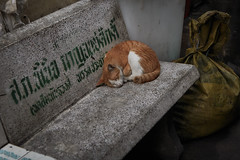 Chinatown Bangkok (Thomas Mulchi) Tags: samphanthawongdistrict bangkok thailand 2017 chinatown animal cat sleeping bench krungthepmahanakhon th