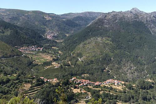 Gavieira