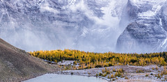 In the Valley of Larches (Kristin Repsher) Tags: autumn canada alberta banffnationalpark transportation larchvalley hiking nikond750 larches trees canadianrockies tenpeaks banff mountains nikon rockies rockymountains