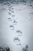footprints (chrisb.foto) Tags: dillenburg hessen deutschland de footprints fusspuren spur track winter snow schnee schuhe shoe nikon dof nature natur donsbach germany sun sunny