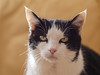 Portrait de chat (jmdonline) Tags: scala maison animaux