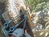 G0121230 (harleyhurricane1) Tags: line zip zipline ziplinepark dadecityflorida treehoppers centralflorida largestziplineparkincentralfl dadecity