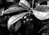 Planting Fields... (angelakanner) Tags: canon70d lensbaby velvet56 longisland plantingfields greenhouse