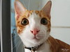 A Surprised Chester (Zelle Manzano) Tags: cat catmoments kitty kitten cute adorable pet animal surprise