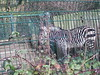 100_0172 (kevinrayworth) Tags: blackpoolzoo blackpool zoo