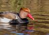 Duck ! (London Lights) Tags: londonlights duck london lights londres londra fowl refllections wildhewaslivid mrmiyagi