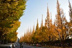 DSC_4652 (ⓥⓘⓣⓐ) Tags: 1117東京 神宮外苑銀杏並木 銀杏 day11