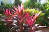 Key West (Florida) Trip 2017 7321Ri 4x6 (edgarandron - Busy!) Tags: florida keys floridakeys keywest butterflyhouse keywestbutterflyandnatureconservatory