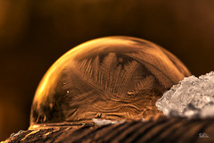 Frozen Bubbles (Claudia Brockmann) Tags: natur nature bubbels frozenbubble frozenbubbles frozen seifenblasen seifenblase winter sundown abendlicht sonnenuntergang sonnenlicht macro