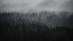 Sombre (der_peste (on/off)) Tags: forest layers sombre sombrescape forestscape woods woodland mist fog misty foggy mood moody atmosphere dark lurky murky haunted trees treescape