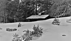IMG_0052 (www.ilkkajukarainen.fi) Tags: winter talvi suomi suomi100 finland finlande scandinavia eu europa travel traveling happy life nature luonto porkkala blackandwhite monochrome mökki stuga maja mustavalkoinen lumi snow metsä forest threes puut