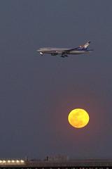 Red Moon (seiji2012) Tags: 羽田 飛行機 満月 浮島町公園 airplane ana jet fullmoon haneda tokyo airport dusk