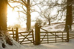 V91A2047-Edit (savingstilgoe) Tags: fawsley snow golden fence gate texture trees tree field noentry winter midlands daventry northampton northamptonshire pretty beautiful scenery white christmas bright rural canon 5d markiii 2470